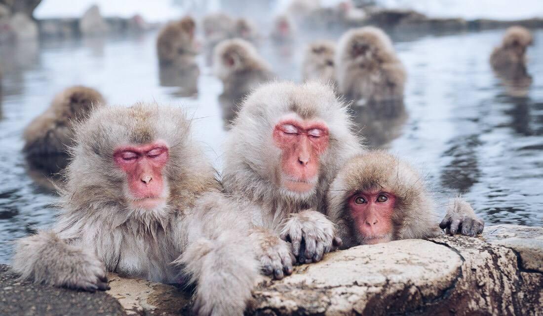 Jigokudani-Monkey-Park-แช่ออนเซ็นดูลิงกับทัวร์