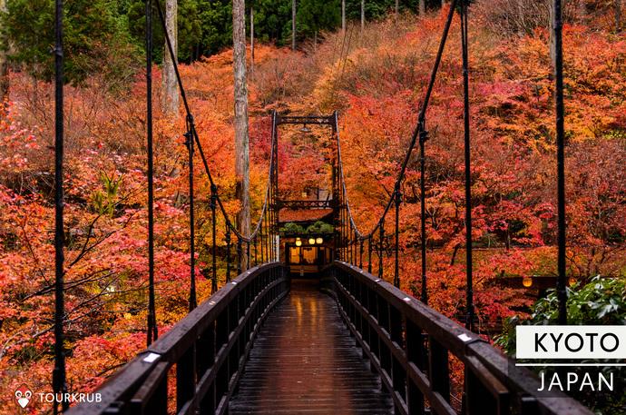 เกียวโต ใบไม้เปลี่ยนสี